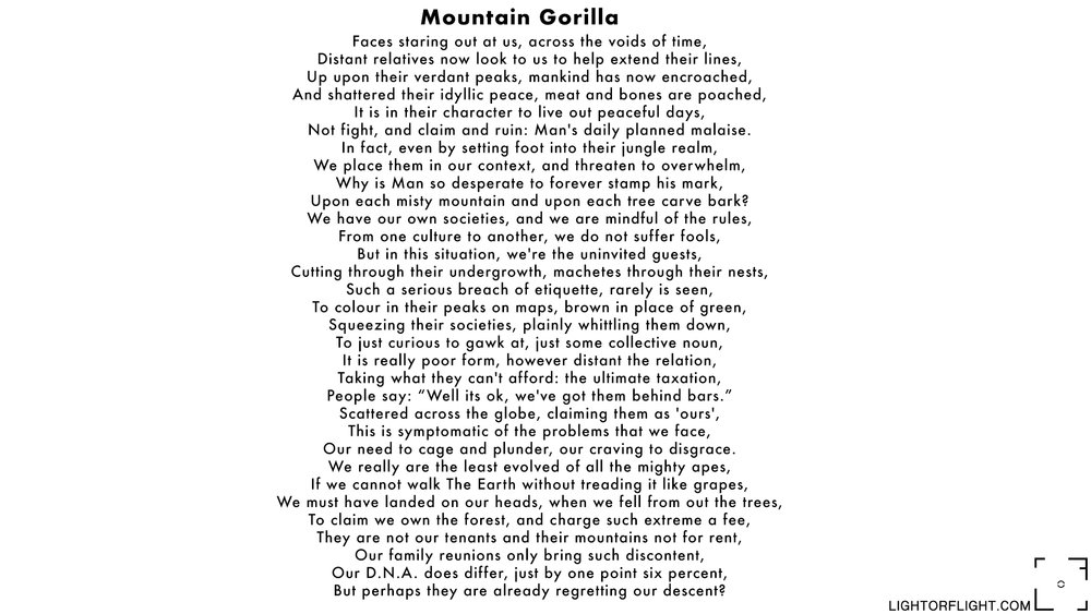 Mountain Gorilla.jpg