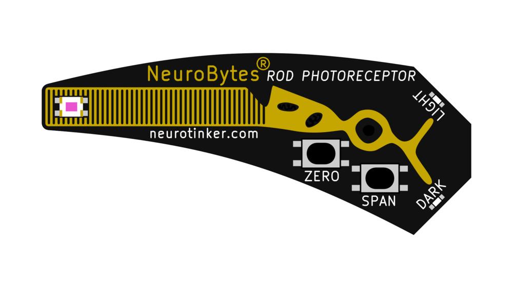 NeuroBytes_Photoreceptor.png