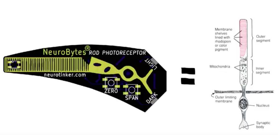 NeuroBytes Rod Photoreceptor