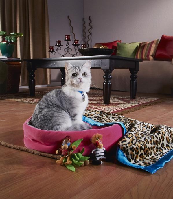 CatBed.jpg