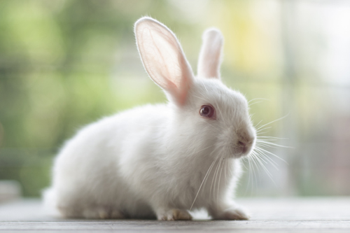 Cruelty-free Resources