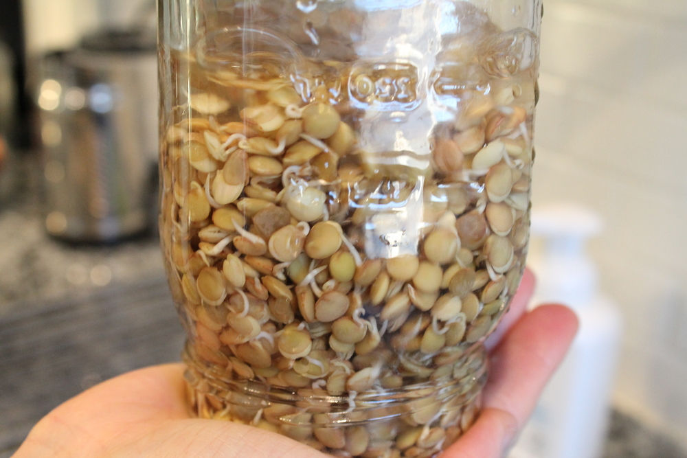 Sprouted Pulses—How to sprout your own beans and lentils and why these are such nutritional powerhouses. Vegan and Gluten-free recipes and so much more. Healthy Me. Healthy You. www.fernsandpeonies.com