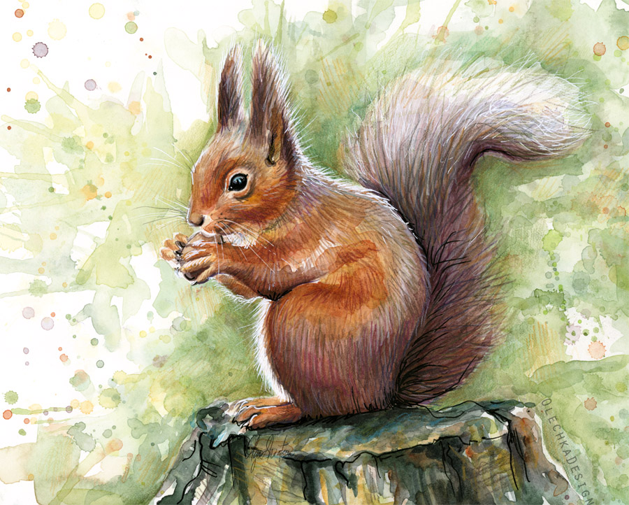 squirrel-watercolor.jpg
