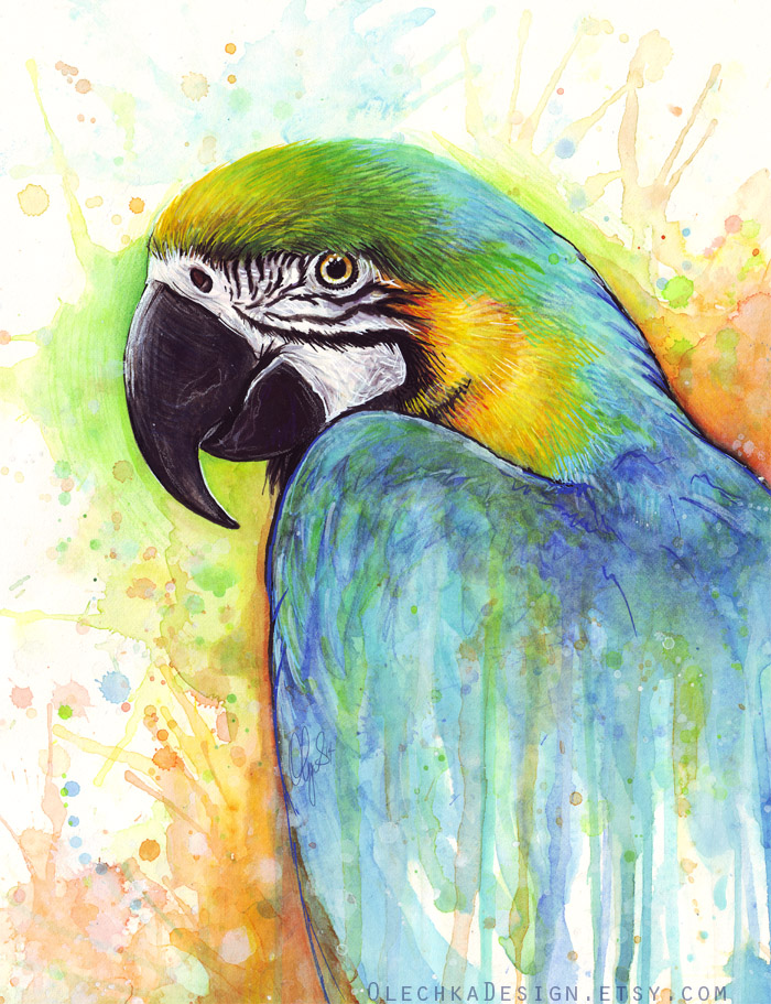 macaw-etsy.jpg