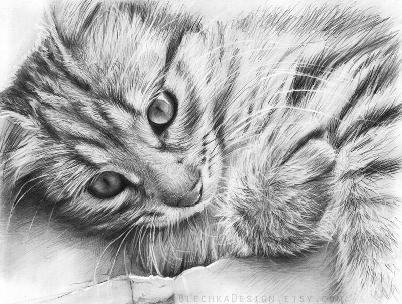 kitty_etsy.jpg