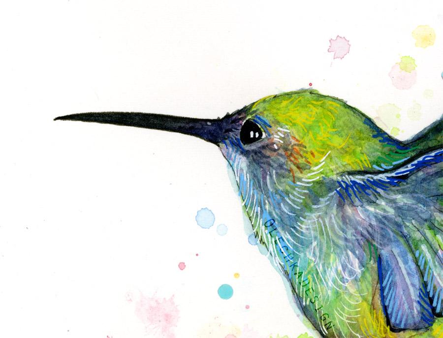 Hummingbird Watercolor Olechka Design