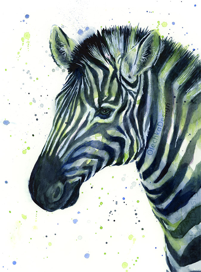 Zebra-12th-man-blue-green-seattle-watercolor.jpg