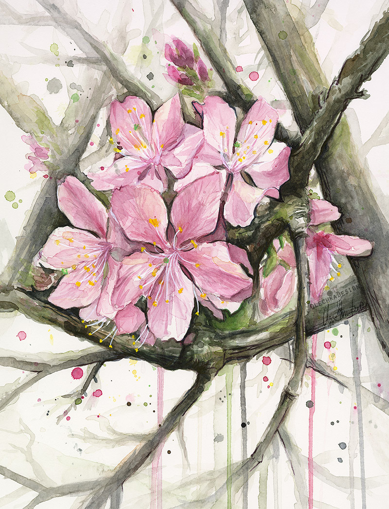 cherryblossom watercolor