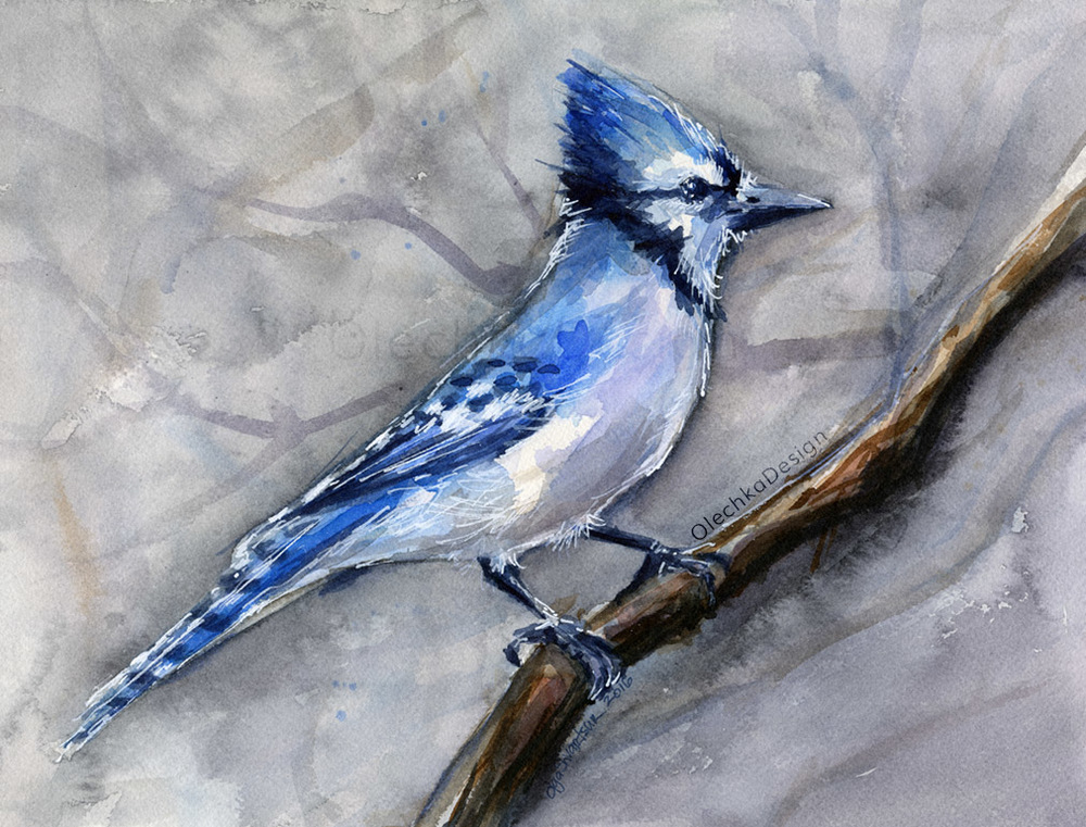 Blue_Jay_watercolor-olechkadesign.jpg