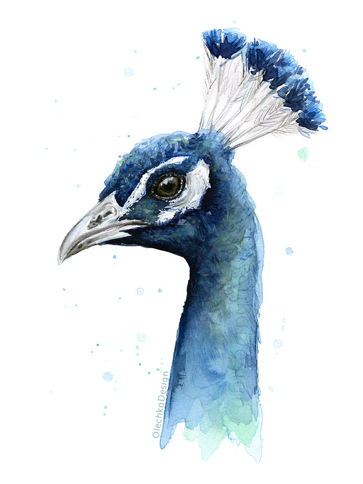 Peacock-watercolor-painting-OlechkaDesign.jpg
