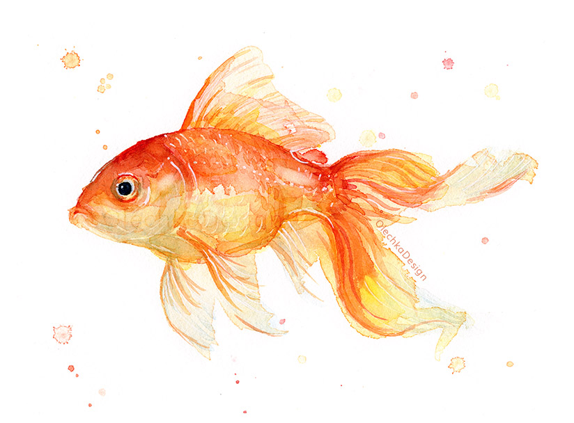 fish watercolor goldfish watercolor olechka design