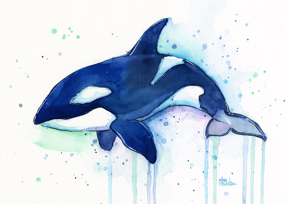 orca whale watercolor