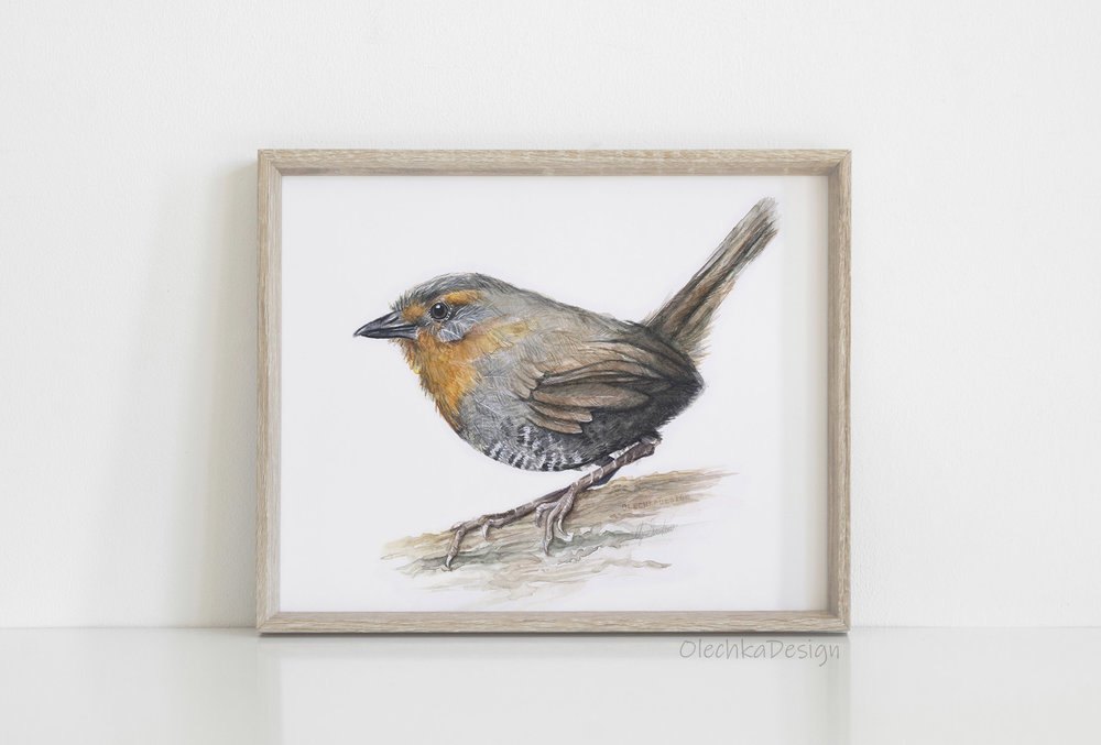 little bird art print