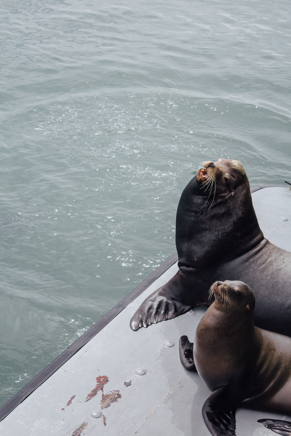 Sea Lion and Pup by Catherine Alyce