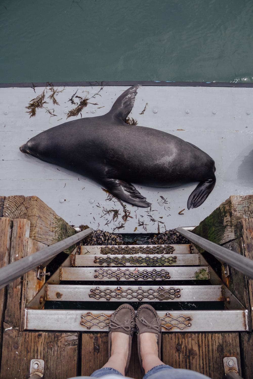 Sea Lion just feet below by Catherine Alyce