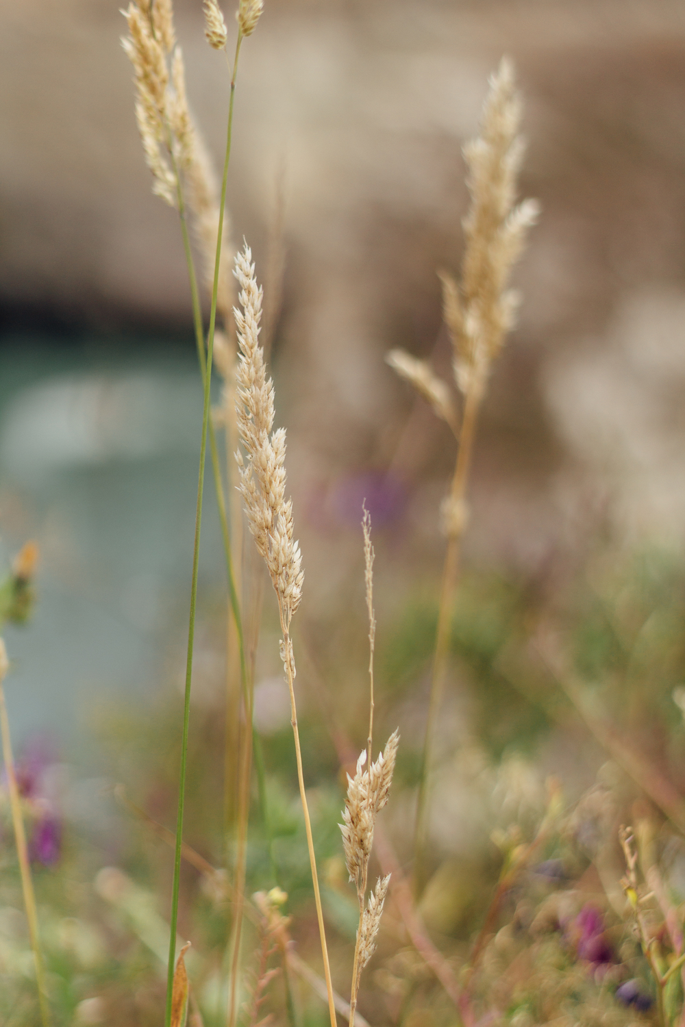 Weeds by Catherine Alyce