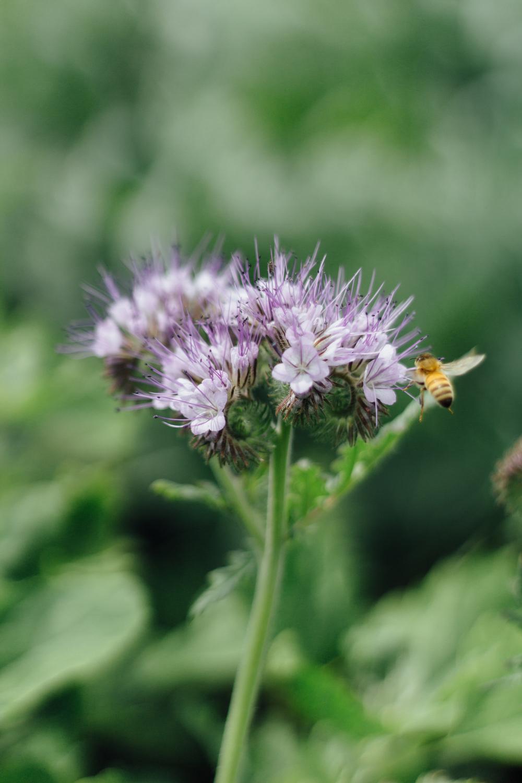 weet Nectar byCatherine Alyce