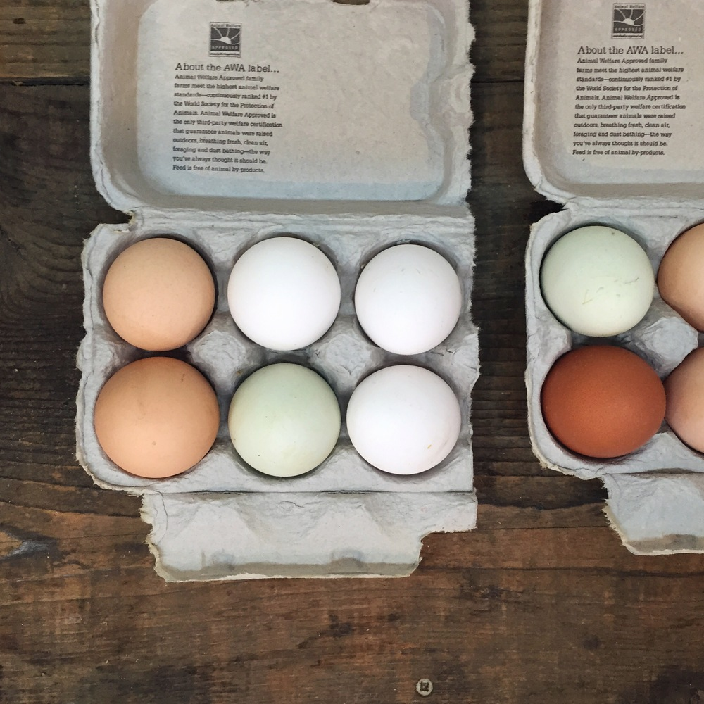 Colored Eggs by Catherine Alyce