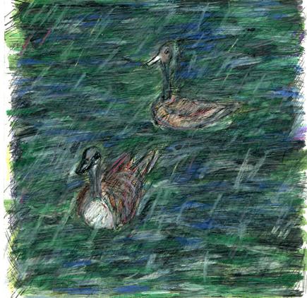 swans-web.jpg