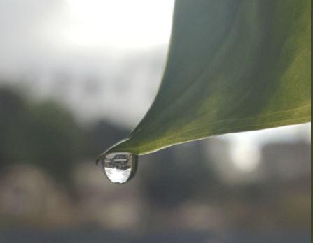 dewdrop.JPG