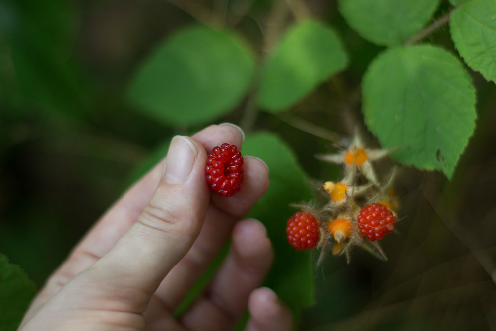 princeton wood weekend getaway nature green raspberry hand.jpg