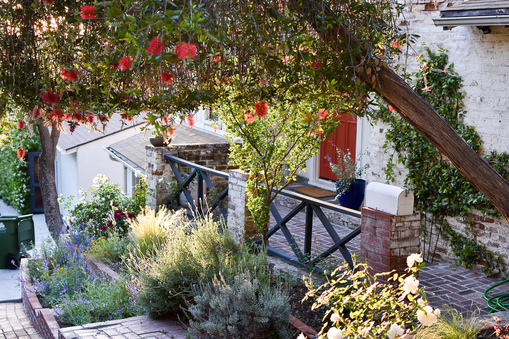 A Saturate Garden in the Silver Lake Hills, with thriving native flowers, herbs & grasses!