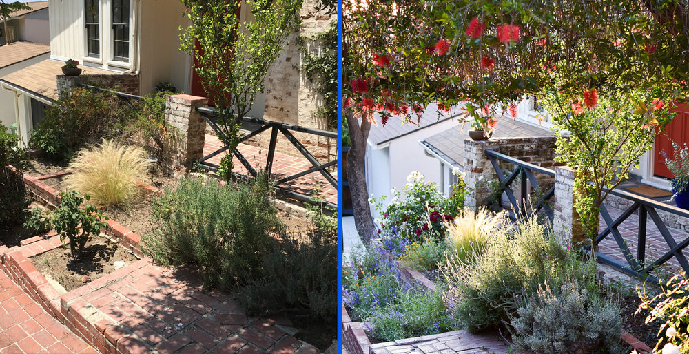 BEFORE & AFTER: Charlie's garden had all the typical problems: depleted, dried-up soil, poorly pruned shrubs, and invasives running rampant. After a little Saturate TLC, it's now sprung back to life!