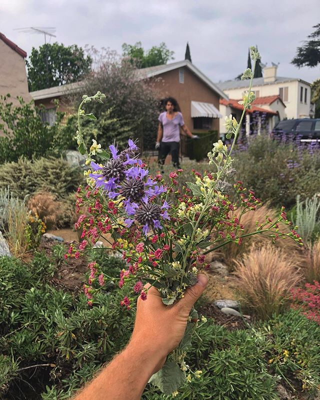 Fresh cut native California flower arrangements for a client. #may #losangeles #gardening #adaptwithus #dreamy #cutflowers #nativeplants #salviaclevelandii