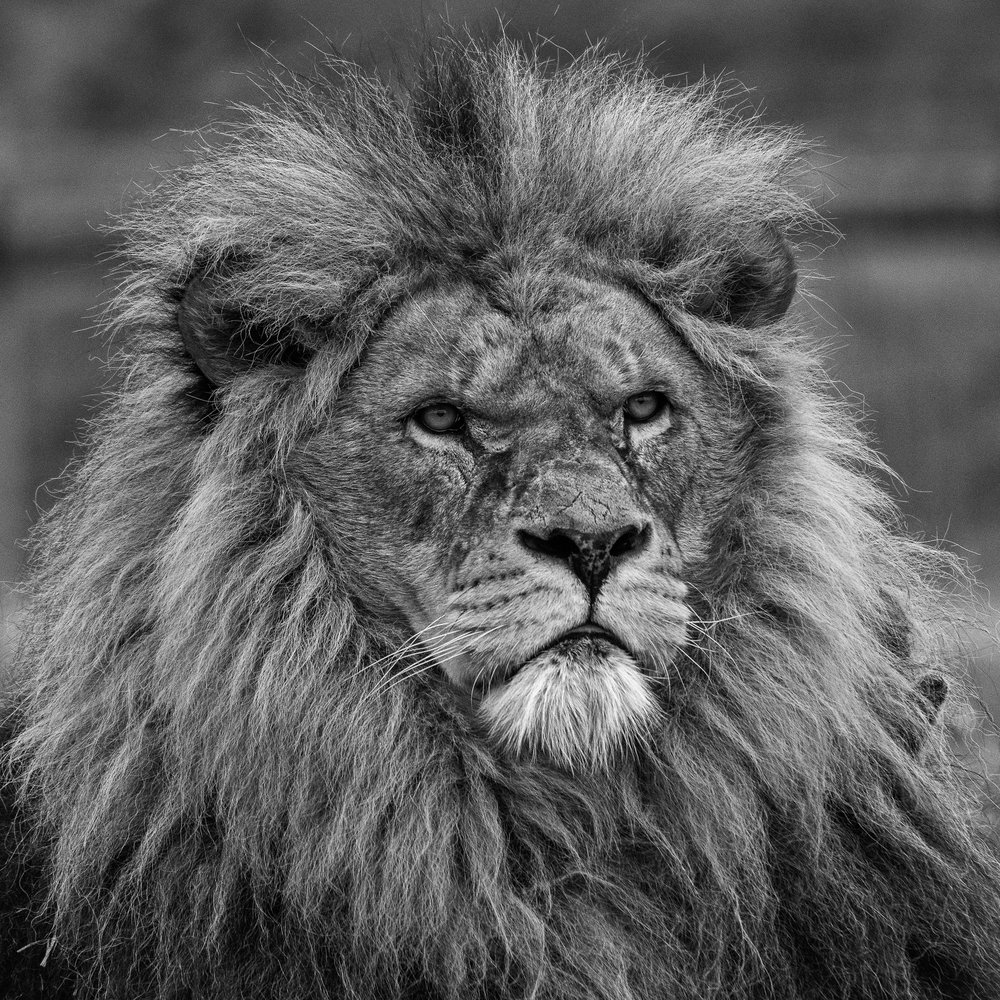 The King - DSC_2487-Edit.jpg