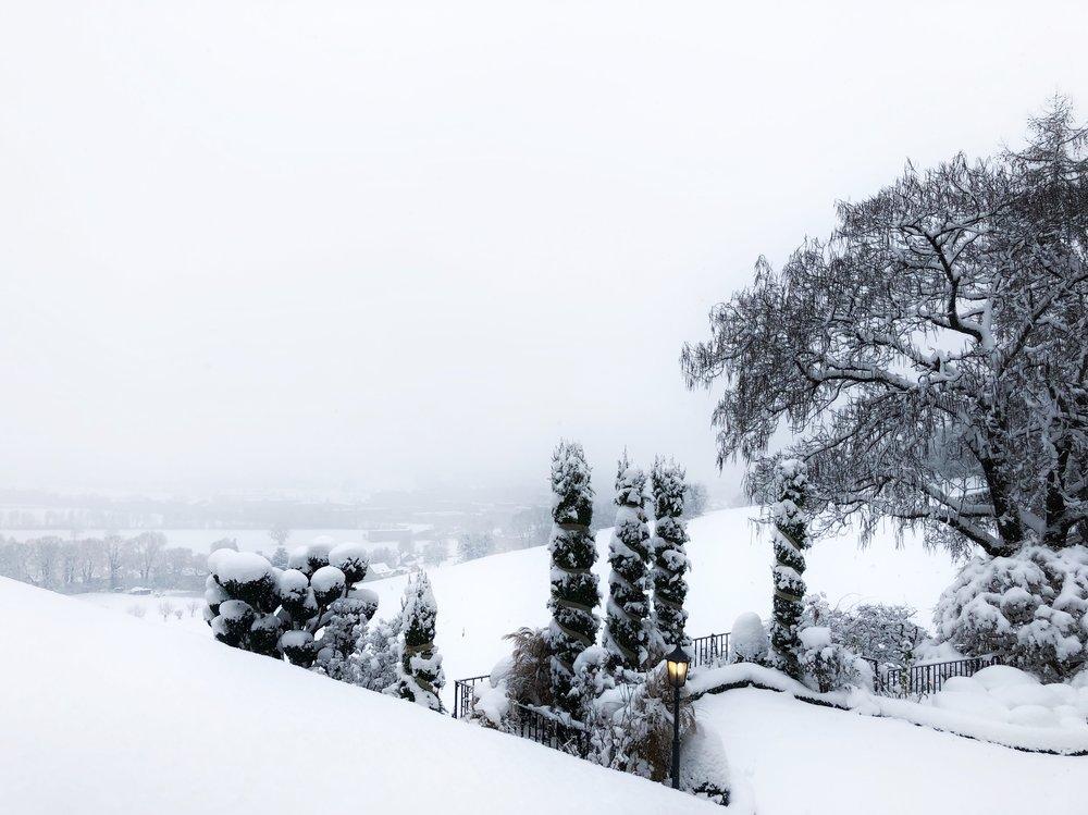 Snowy Trees.jpeg