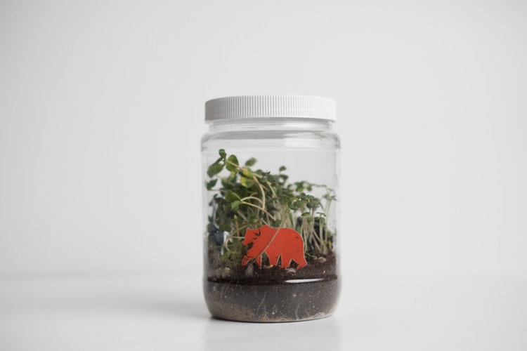 New Product The Take Home Terrarium The Ruby Thursday Collective