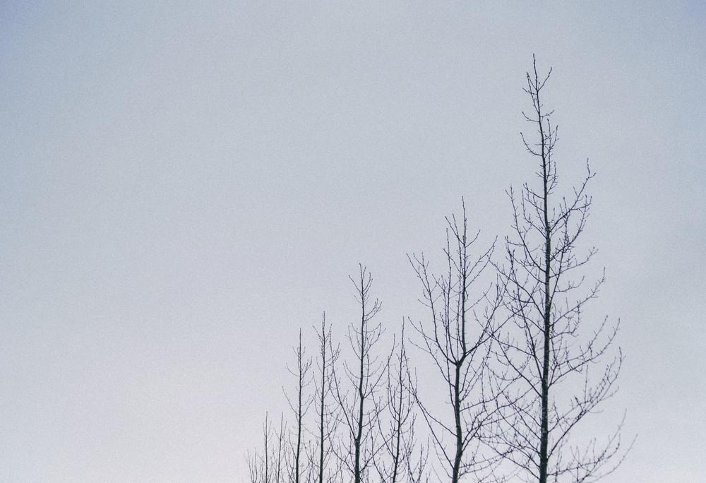 Sky Veins