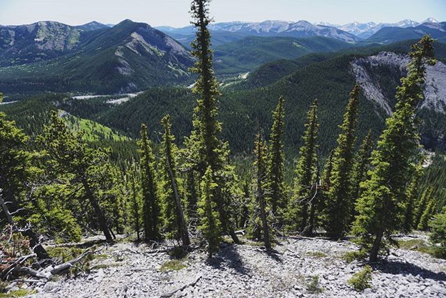 Looking down into #elbowvalley from the narrow and steep trail up to #prairiemountain yesterday. #travelalberta #explorealberta #dodopeshit #getoutside #kananaskis #hiking