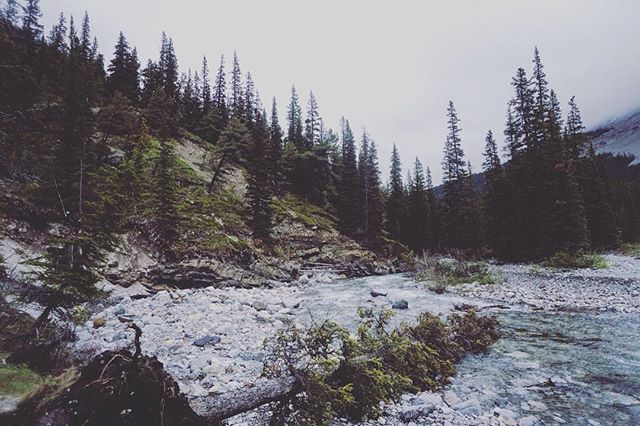 A bridge washout on the way to #tombstone so instead of fording it as the water level was way too high and too fast, we decided to ascend the steep slopes on the left side of the image. Sketchy sketchy sketchy. Hahah. #braggcreek #kananaskis #backcountrycamping #dodopeshit #travelalberta #explorealberta