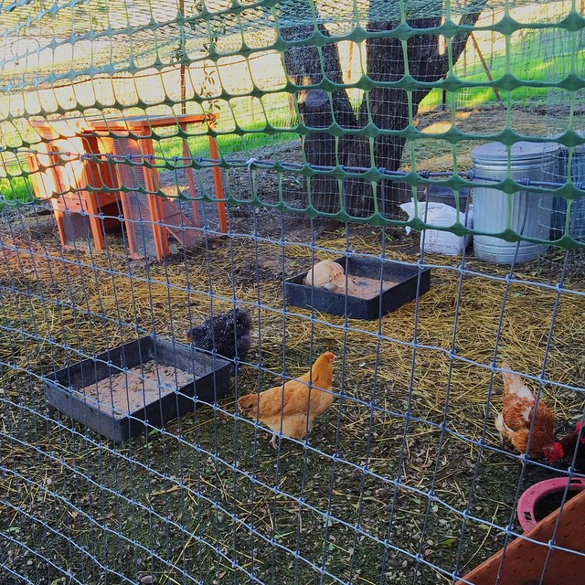 Chicken coop right outside our cottage, fresh eggs for breakfast! 🐓 #cultkintravels