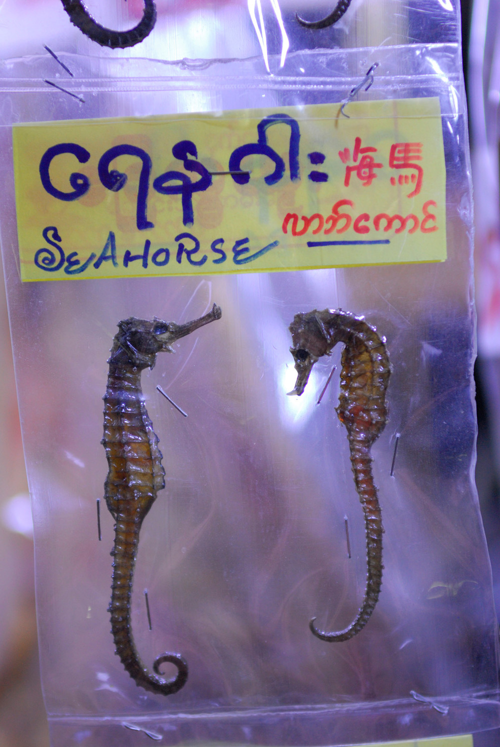 Sea horse snacks, Chaungtha, Myanmar