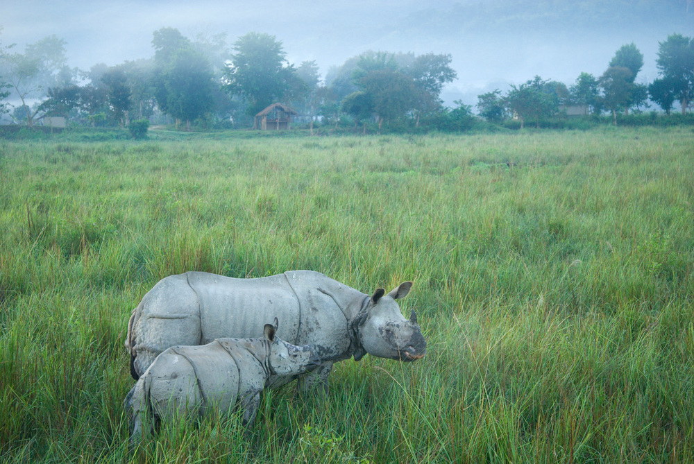 On the edge of Kaziranga National Park, Assam State, India.