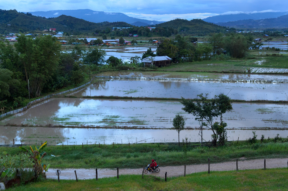 A view over the flooded rice fields of Bario town in Sarawak, Malaysia. Rice is the region's staple crop and, until recently, Bario rice had an official Slow Food designation.