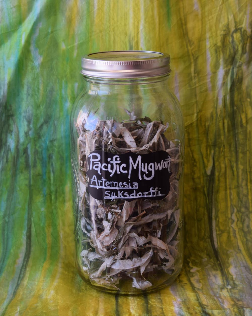 Pacific Mugwort**