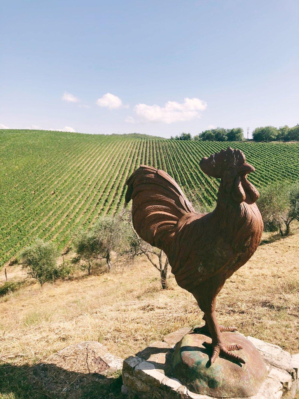 The Gallo Nero at one of our preferred wineries in Chianti!