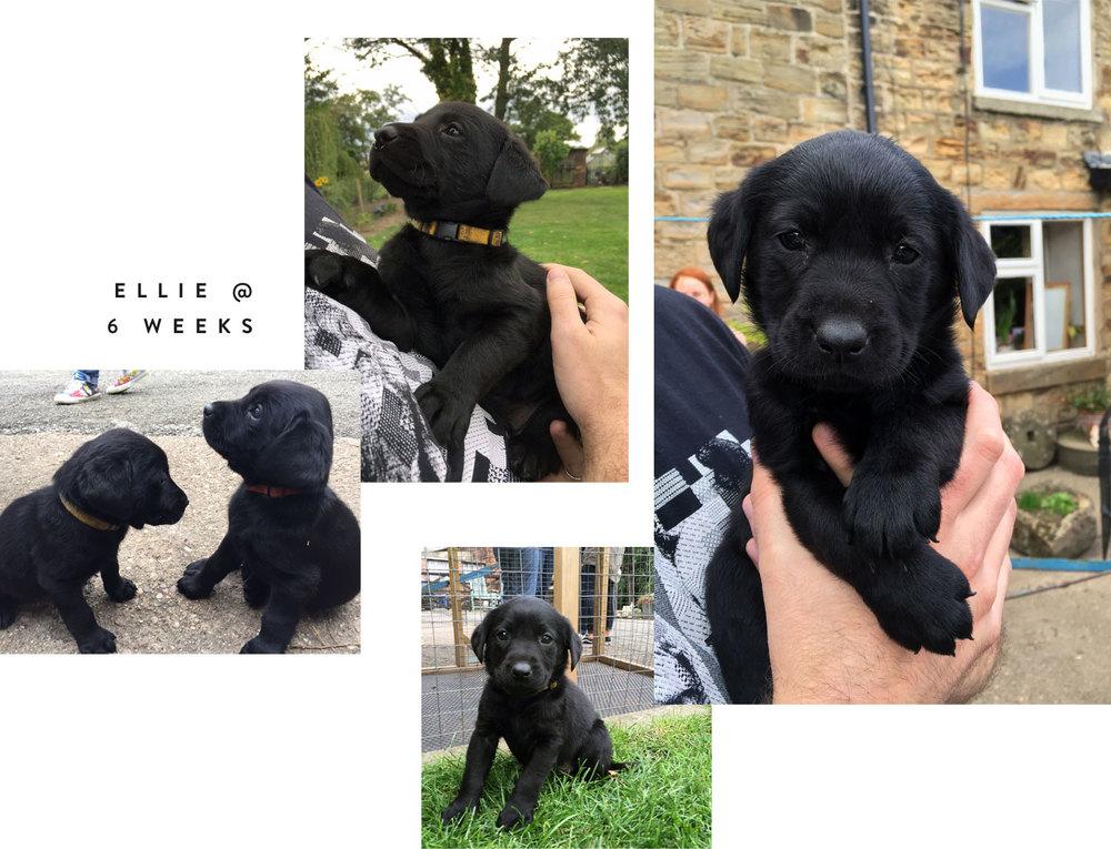 Meet Ellie at 6 weeks