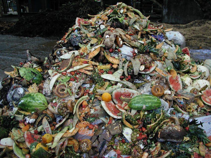 food_scraps_pile.jpg
