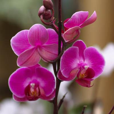 Orchid Care Cactus Tropicals