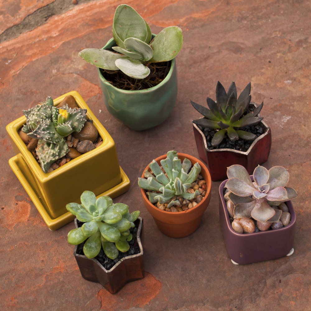 The Urban Succulent Collection — Cactus & Tropicals