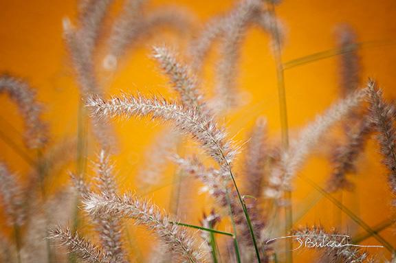 Flower11b.jpg