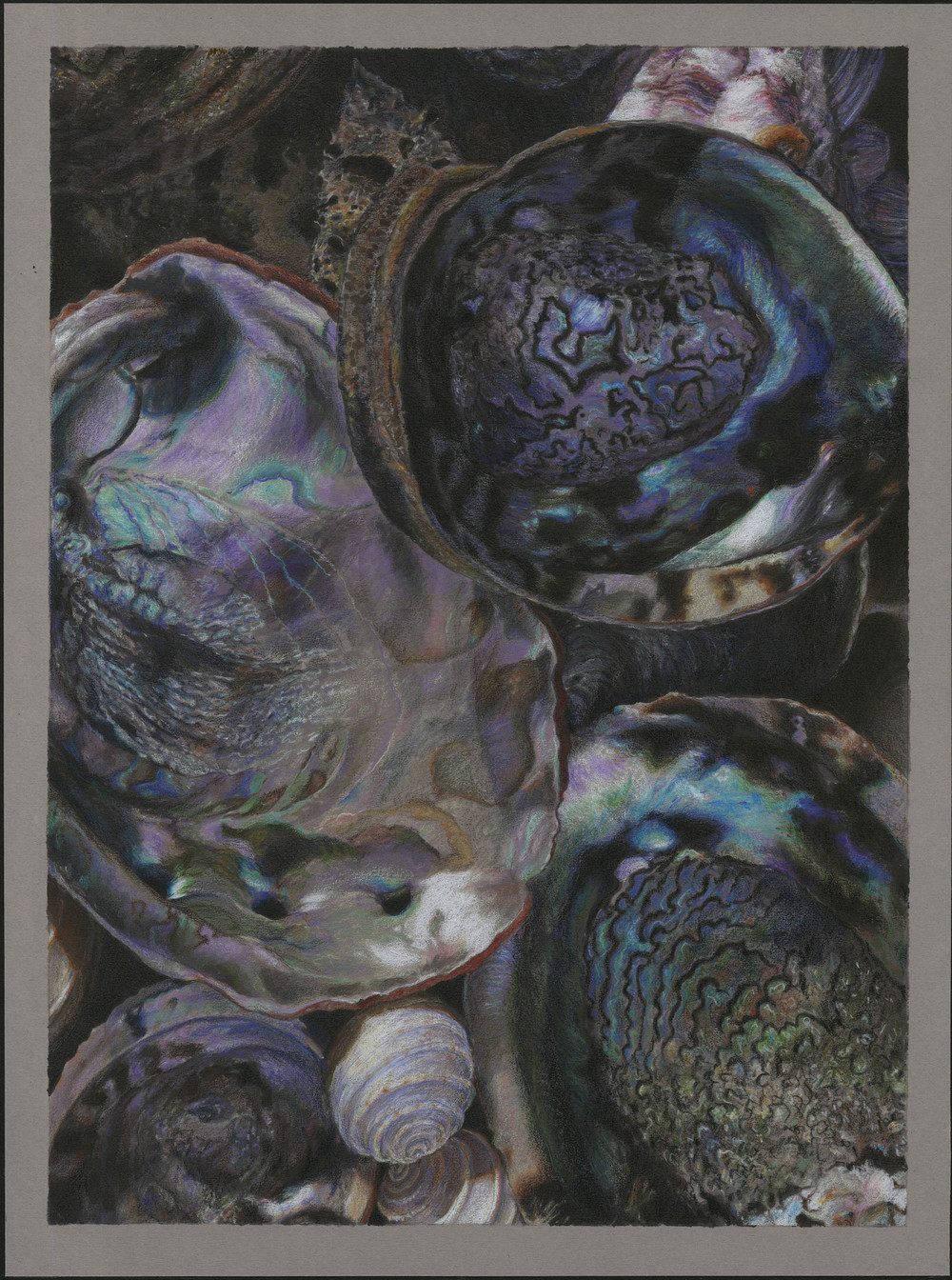 biomed abalone c.jpg