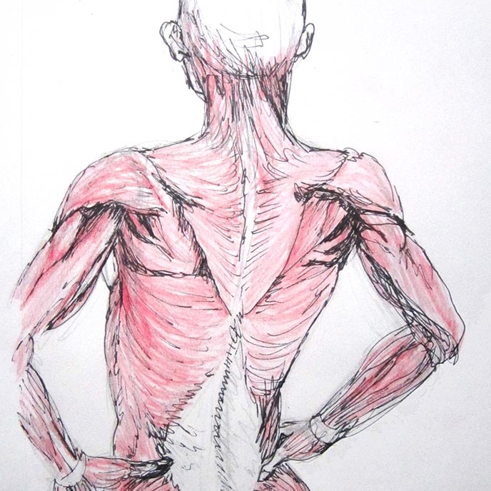 Anatomy + Biology
