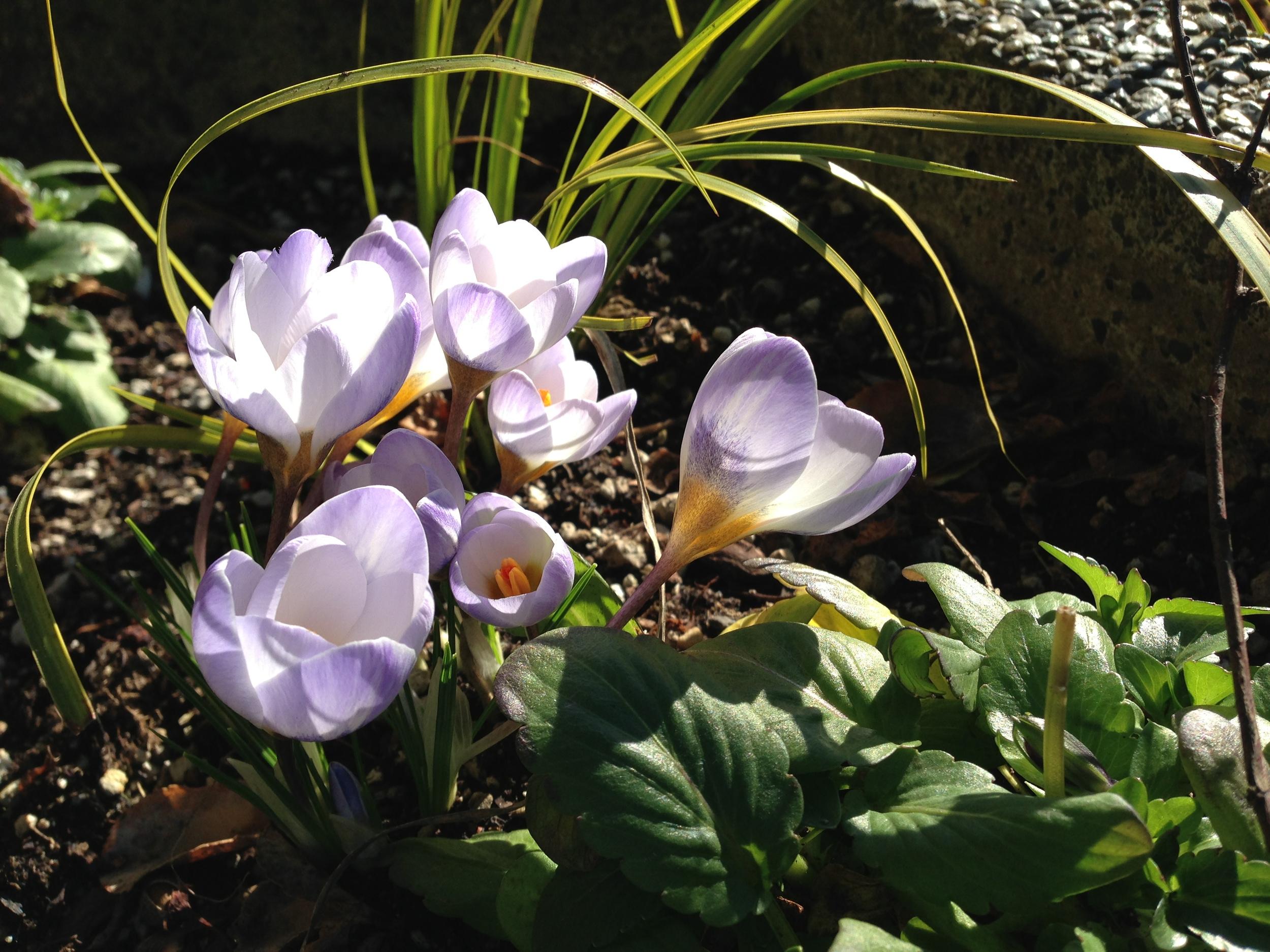 Sun on flowers