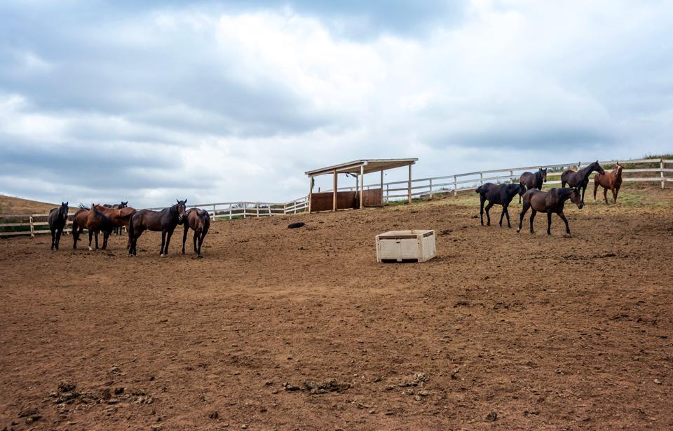 The Fallen Herd.jpg
