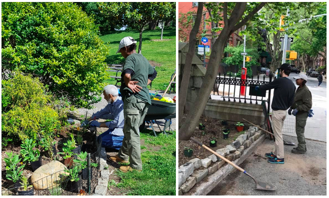 Fort Greene Park Gardener Maxine Webb and her team of volunteers enlivened the park's 30 gardens in 2017, focusing on erosion control, habitat creation for pollinators, and creating visual interest during all four seasons.
